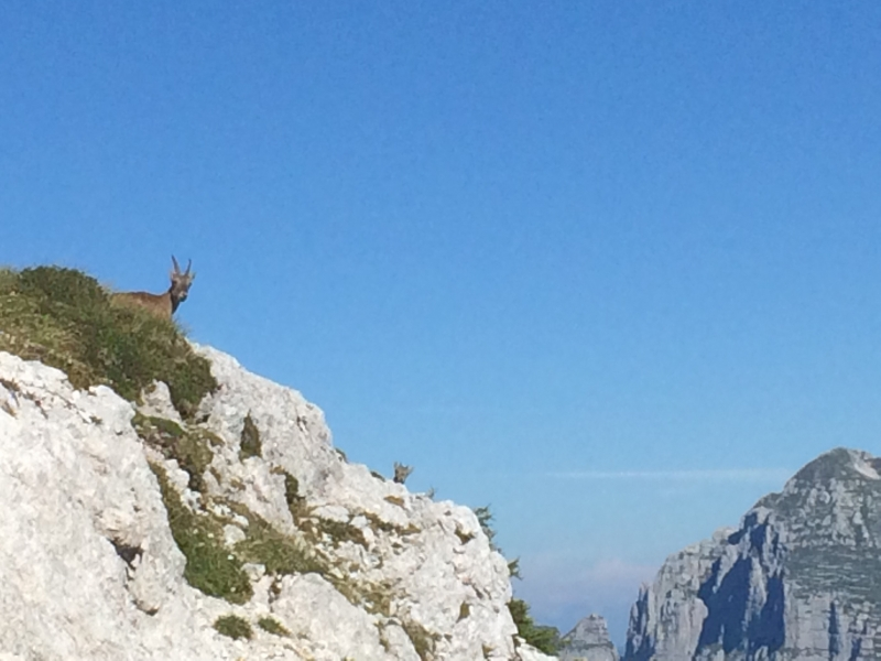 Monte Canin